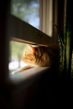There's always room - Orange tabby cat - window sill