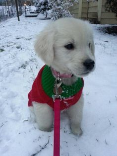 My puppy enjoyed her first snowfall! All Things Cute, Stay Warm, Best Funny Pictures, Puppy Love, Cute Dogs, Merry Christmas, Cute Animals, Puppies, Pets