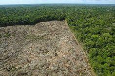 Folha Política: Dilma corta 72% da verba contra desmatamento na Amazônia