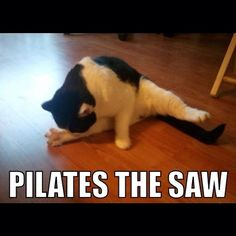 Pilates is an exercise system targeted at developing flexibility and core strength as well as promoting total body balance. Pilates is so versatile that it can be performed by senior citizens and seasoned athletes who Funny Cat Photos, Funny Animal Pictures, Cute Funny Animals, Funny Cute, Funniest Animals, Epic Photos, Animal Yoga, Humor, Gym Humour