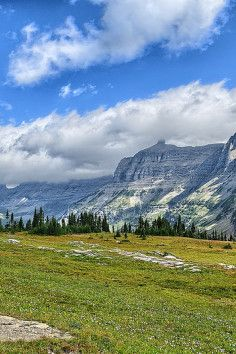 Garden Wall in Flathead County, Montana. It is a steep alpine area within Glacier National Park that is covered in numerous flowering plants and shrubs in the summer months.
