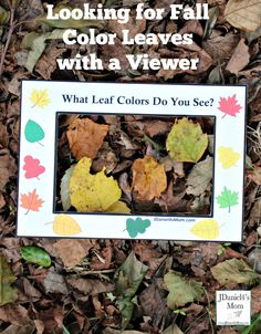 Your children will have fun working on their colors and viewing leaves with this printable looking for fall color leaves viewer. Autumn Activities For Kids, Printable Activities For Kids, Kids Learning Activities, Science Activities, Science Curriculum, Preschool Ideas, Autumn Leaf Color, Outdoor Fun For Kids, Fall Projects