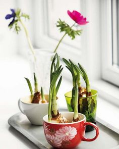 31 Idea To Use Tableware As Planters And Flower Vases - Shelterness Spring Flower Bouquet, Spring Flowers, Fruit Garden, Garden Plants, Teacup Flowers, Outdoor Living Rooms, Bulb Flowers, Little Plants, House Doctor