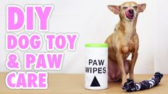 Make an upcycled dog toy & organic pet paw wipes with these easy, money-saving DIYs. Dogs and cats need things to live their little lives, but that can all a...