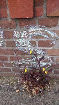 Flowers & Chalk, Rotterdam
