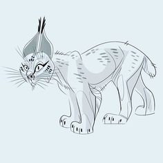 The quickest Lynx sketch. #Lynx
