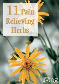 A list of plants known to have pain-relieving properties - Herbal Living