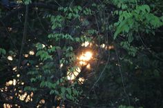 Sunrise through a line of trees in Alibaug!
