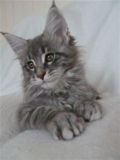 Votre chaton vous fait craquer : retrouvez tous les conseils d'éducation et des articles santé sur notre blog animopharma.fr, achetez et demandez conseil pour le nourrir et le soigner sur notre site de vente en ligne lapharmaciecentrale.fr