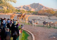 Al Ain Zoo UAE 2015 #WinWithRotana