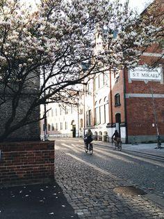 . Magnolia in Lund Sweden