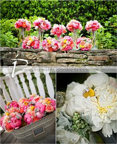 coral and yellow garden roses