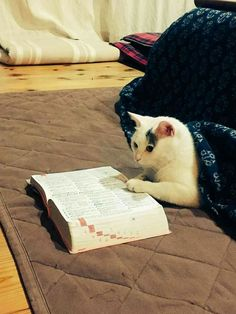 I ღ Cats. A kitten is a juvenile cat. After being born, kittens are totally dependent on their mother for survival and they do not normally. I Love Cats, Crazy Cats, Cool Cats, Funny Cats, Funny Animals, Cute Animals, Funniest Animals, Kittens Cutest, Cats And Kittens