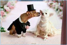 Собаки то оказывается частенько бывают на свадьбах :)   #свадьба #собаки #собака #россия #москва #серпухов #тула #спб #хабаровск #самара #омск #красиво #животные #добро #animals #pet #pets #dogs #dog #dogy #wedding #moskow #russia #animal