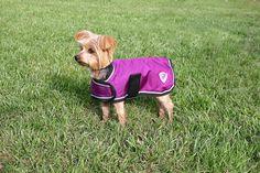 Kensington KD533PC-XXLRP Dog Coat, XX-Large -- Tried it! Love it! Click the image. : Cat Apparel