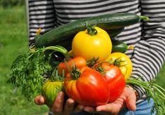 Rodzina z Zielonej Góry z prostych rolników przekształciła się w dużych przedsiębiorców. Poznaj ich sekret! Starting A Vegetable Garden, Vegetable Garden For Beginners, Gardening For Beginners, Gardening Tips, Vegetable Gardening, Garden Soil, Garden Seeds, Herb Garden, Growing Veggies
