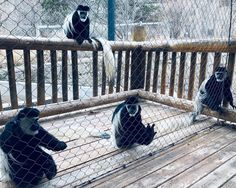 Cheyenne Mountain Zoo, Penguins, Group, Animals, Instagram, Animales, Animaux, Penguin, Animal