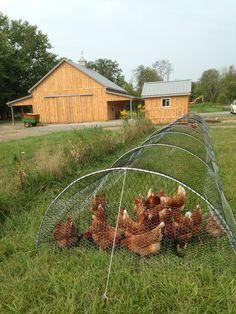 Estructura para pollos.