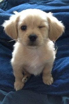 cuteness overload in this winking puppy.