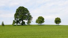 Il colore verde assume un significato molto positivo qui da noi in occidente. Viene spesso utilizzato per rappresentare l'abbondanza di denaro e la fortuna nel senso generale del termine. La sua simbologia rimanda all'equilibrio totale, fatto di armonia e amore. Una delle prime immagini che probabilmente attraversano la nostra mente quando si pensa al verde, …