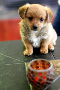 tiny dog.....I want one!!!!!
