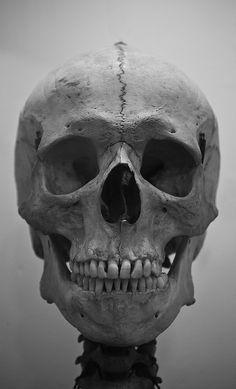 Image result for skull front reference grey background