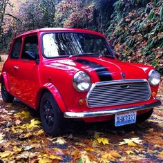 Buy a mini cooper and call it Larry
