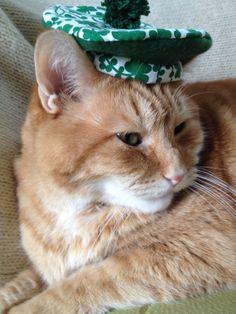 Cat Hat for St Patrick's Day - Shamrocks
