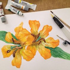 Lillies, for my mom.  |Canson hot pressed-watercolor|200gsm|A4|   Trying out the waterbrush from Derwent. Helpfull enough for beginner like me.