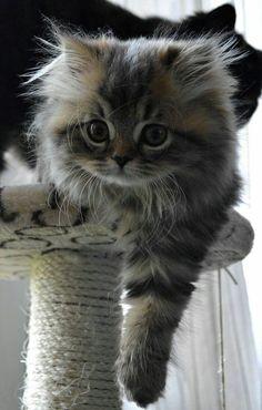 http://de-belles-images.blog4ever.com  suis passionnée par les animaux en général  et plus particulièrement par les chats et les oiseaux. J'adore la nature, les paysages, les découvertes, les jeux de couleurs et de lumière, bref, j'aime les jolies choses...