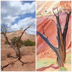 Girards Tree? Ghost Ranch, New Mexico.  Georgia O'Keeffe.