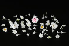 White edible flowers. Valkoisia syötäviä kukkia. Edible Flowers, Cocktails, Stud Earrings, Craft Cocktails, Stud Earring, Cocktail, Earring Studs, Drinks, Smoothies