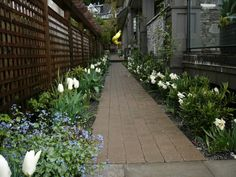 If your struggling for some color combinations for your flower garden, try some of these designer ideas. Side Walkway, Flower Garden Design, Flower Gardening, Black And White Flowers, White Gardens, Gardening For Beginners, Paths, Sidewalk, Bulb