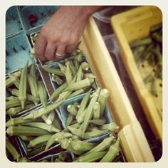 Lacto fermented okra pickles (with and without whey options) ○ via frog bottom farm Probiotic Foods, Fermented Foods, Okra Recipes, Real Food Recipes, Pickled Okra, Fermentation Recipes, Veggie Tales, Soup And Salad, Pickles