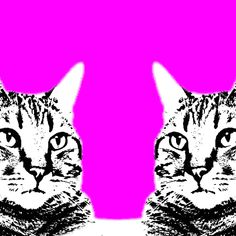 Discover & share this Animation Domination High-Def GIF with everyone you know. GIPHY is how you search, share, discover, and create GIFs. Trippy Cat, Have A Nice Trip, The Son Of Man, Cat Colors, Pretty Cats, Colorful Wallpaper, Cat Gif, Optical Illusions, Fractals