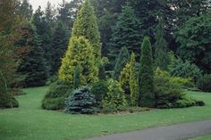 Garden Design Ideas with Conifers -Study, Learn Garden Design at home
