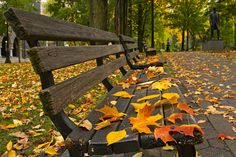 Beautiful hd photography of park bench in autumn season, nature photography.