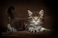She has it. by robertsijka #animals #animal #pet #pets #animales #animallovers #photooftheday #amazing #picoftheday
