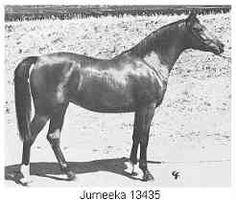 Jurneeka, Khemosabi dam