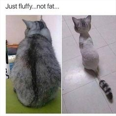 Funny Animal Picture Dump Of The Day 27 Pics | this shaved cat looks so damn cute, it's just like a littlepetshop cat