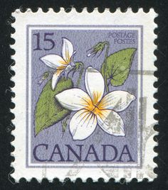 stamp printed by Canada, shows Canada violet, circa 1979