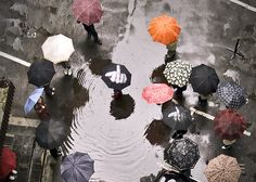 """We still have over a solid month left in the summer season. This year, let your true feelings about the crappy weather be known with this F*ck The Rain Umbrella (also known as the """"Up Yours Umbrella""""). Rain Umbrella, Seasons, Penguin, Weather, Rain, Artist, Water, Seasons Of The Year, Penguins"""