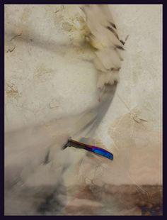 iPhoneography,  Blue Fish    - Armin Mersmann