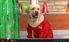 Tips for Planning the Perfect Doggy Tailgate #Sharemolove