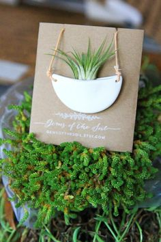 Half Moon Living Plant Necklace // Plant Vessel Pendant //