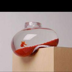 Fishy fish tank