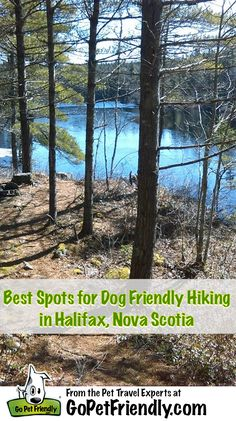 Best Spots for Dog Friendly Hiking in Halifax, NS from GoPetFriendly.com