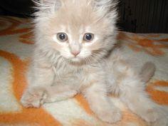 cat - http://www.1pic4u.com/blog/2014/09/22/cat-46/