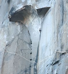 Alex Honnold leads the Great Roof pitch on he and Hans Florrine's record-breaking speed ascent of The Nose. Click through for several images from the acsent - from Tom Evans of El Cap Pics. ElCap Report 6/17/12 | ElCap Reports #climbing #TheNose #ElCap