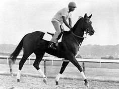 "Today we remember the greatest racing filly of all time, Ruffian. The undefeated filly ran to her grave in the match race ""The Battle of the Sexes"" with colt Foolish Pleasure. She broke her ankle on the final turn. Braking down on the racing track and later euthenized in the Veterinary Hospital"